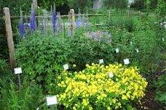 garden vignette, Delphinium, Rudbeckia, Geranium