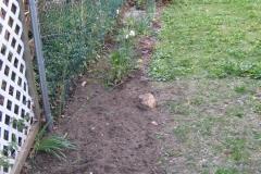 after weeding