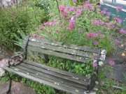 bee balm and bench