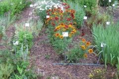 area of lower garden, August