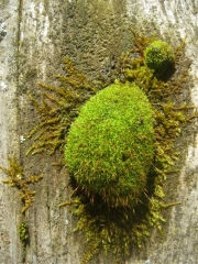 moss on wood