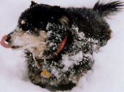 Dog in winter_ 1999