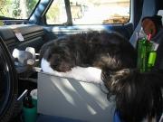 Gypsy's truck throne
