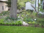 shade garden in early Spring