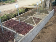 2nd of 2 14' raised beds