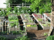a portion of the raised bed area
