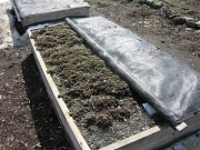 uncovering beds in the Spring
