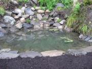 daylily field pond