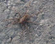 interesting, but unknown spider